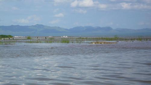 Lac chamo : croco et oiseaux