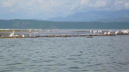 Lac chamo : oiseaux