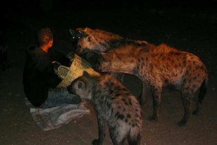 Harar- repas des hyènes
